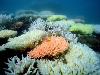 Staat van Great Barrier Reef nu officieel 'pover'