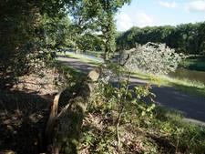 Boom valt net achter fietsers op fietspad Duinweg