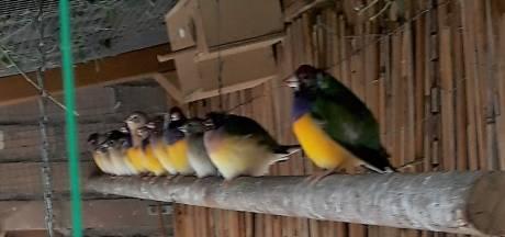 Een bonte groep met vriendelijke kwetteraars