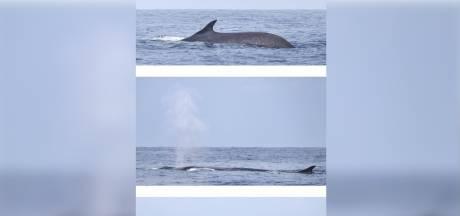 Un rorqual de plus de 20 mètres et pesant 70 tonnes aperçu dans le sud de la France