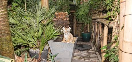 Brabants 'Junglehuis' speelde hoofdrol in reportage over hennepteelt
