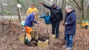 Gemeente plant 32 bomen