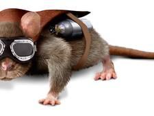 Heldhaftige ratten snuffelen naar landmijnen en tuberculose