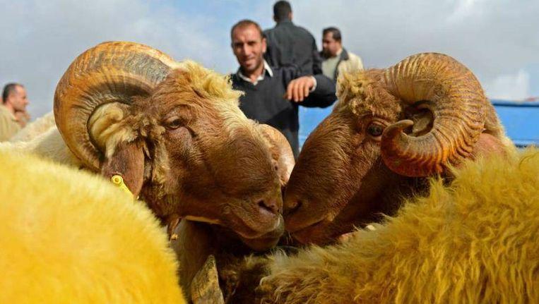 Schapen op een markt in de Zuid-Turkse stad Kilis. Beeld AFP