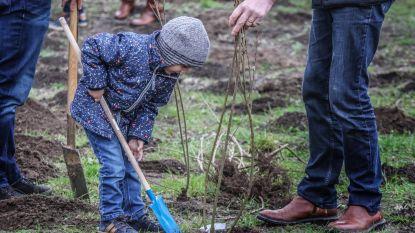 Ieper, Dikkebus, Vlamertinge, Zillebeke en Boezinge krijgen nieuw geboortebos