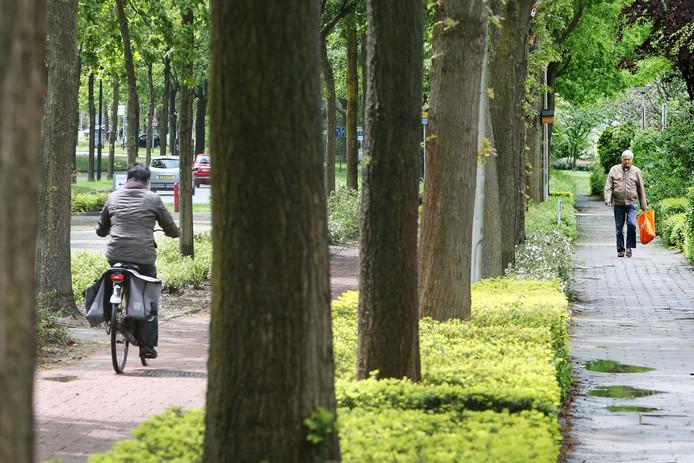 Archieffoto: De eiken tussen het fietspad en het voetpad aan het Schoonhout in Etten-Leur werden gekapt. De gemeente houdt zich na jaren aan haar belofte ze te herplanten.