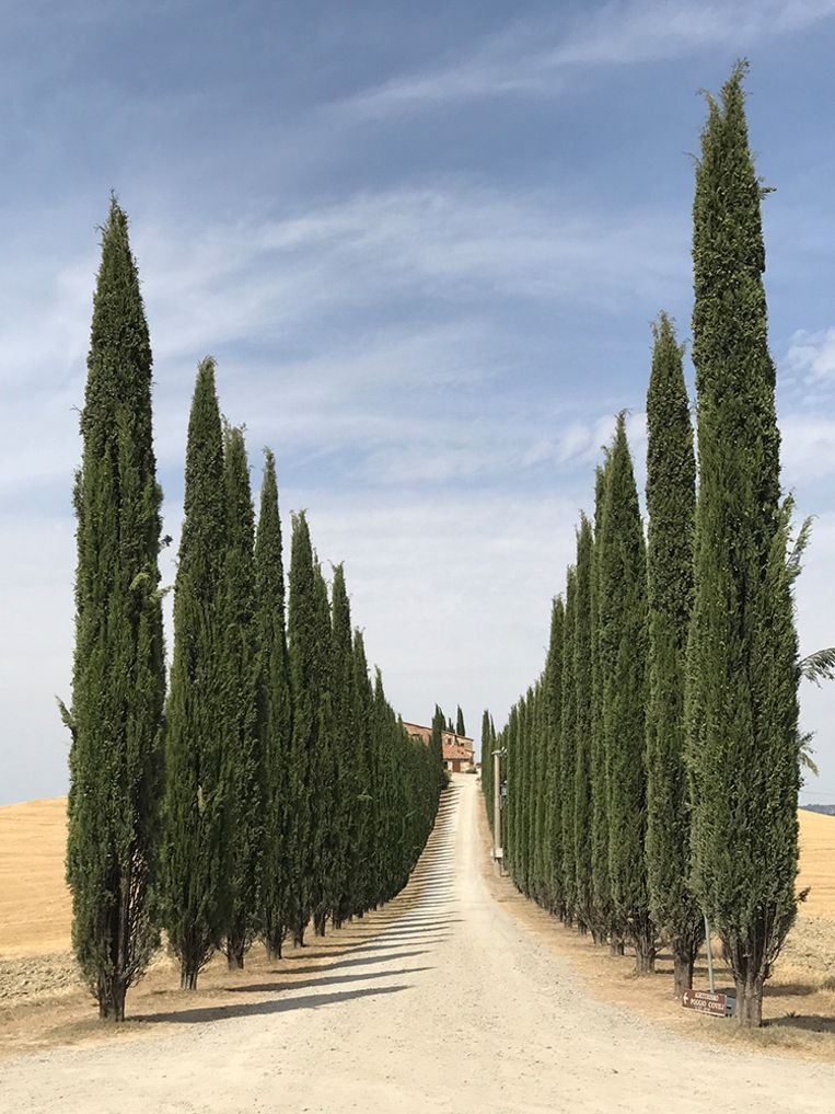 Road of Tuscany - Lidia Muntean (Roemenië)