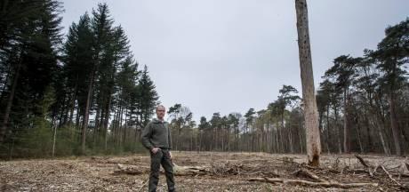 Voortschrijdend inzicht bij Staatsbosbeheer Achterhoek: kaalkap in bossen onverantwoord