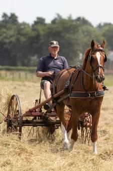 Paardenhouder Ton en Wilde Billy halen hooi binnen op de ouderwetse manier: 'Het is ook goed voor het milieu'
