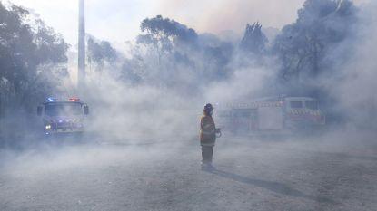 Australië geteisterd door bijna tachtig hevige struikbranden