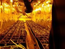 'Mobiele wiet' in trailers Oosterhout: drugscriminelen worden steeds creatiever