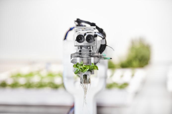 Waar arbeiders niet meer te porren zijn, klagen robots niet over het tijdrovende proces