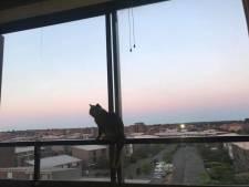 'Wonderkat' van raadslid Davituliani overleeft val van vijf hoog