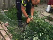 Wijkagent helpt Nijmeegse huurder met verwijderen van zijn hennepplanten