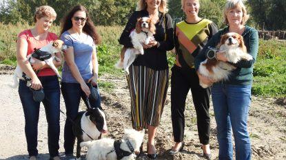 Hondenlosloopweide in Langerbrugge (en later ook aan Kasteel Wippelgem)