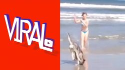 VIRAL: Acrobatische hond doet radslag