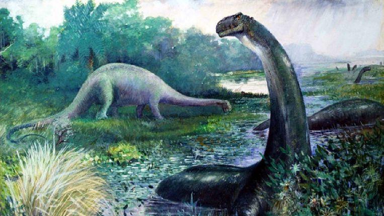 De Apatosaurus excelsus, goed voor 2500 liter methaan per dag. Beeld Charles R.Knight