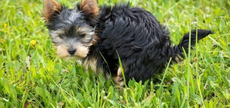 Altena gaat hondenpoepzakjes vervangen door plastic variant