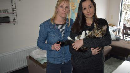 """Jolien en Leen slaken noodkreet: """"Iemand heeft het gemunt op onze katten"""""""