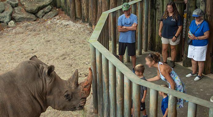 Tijdens de 'Rhino Encounter' in de zoo in Florida kunnen mensen dichter bij de neushoorns komen.