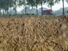 Sojateelt wordt steeds serieuzere zaak, zo ook in Reek: 'We willen naar 4.000 kilo per hectare'