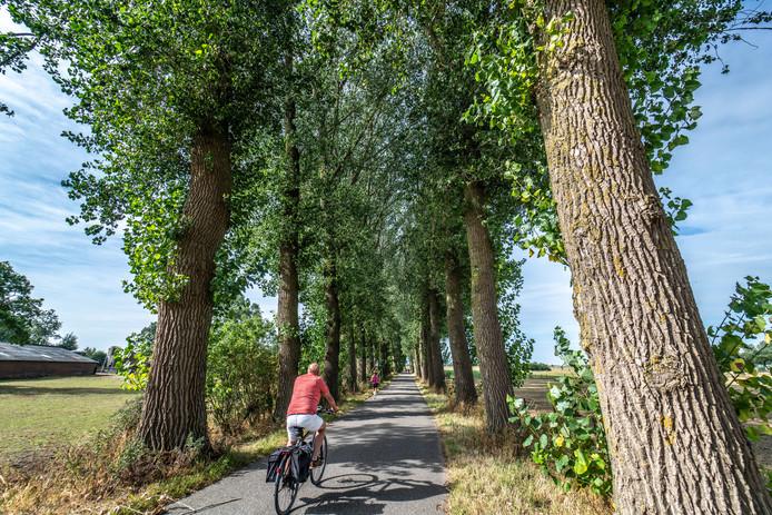 Voor de bomenkap was de Schellerenkweg een geliefd laantje voor fietsers en wandelaars. De straat maakt deel uit van het Rondje Zwolle. Door droogte moesten de populieren vorig jaar worden gekapt.