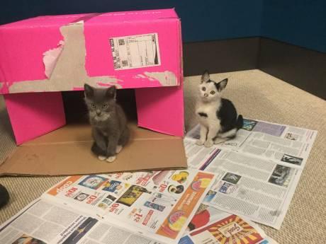 Tamme kittens van parkeerplaats gemeentehuis gehaald