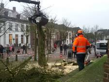 Bevrijdingsboom in Sint-Michielsgestel wijkt voor nieuwe centrum