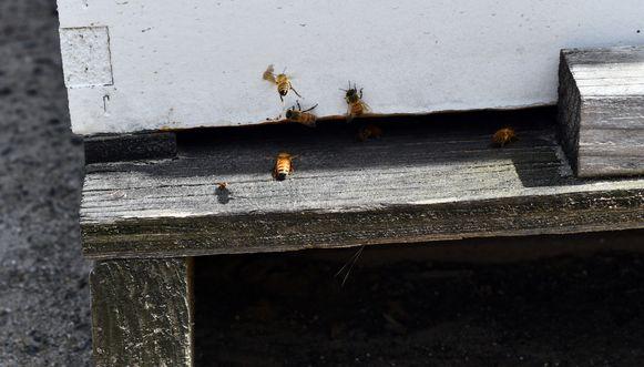 Ook bijen duiken terug overal op