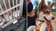 Politieman redt opgesloten puppy uit oververhitte auto