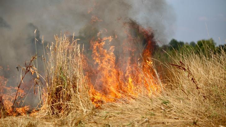 Hevige brand in berm aan de rand van Rijen