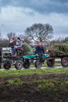 Met paard en kerstboom door de polder