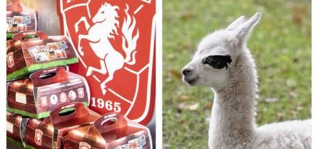 Fans FC Twente kunnen toch genieten van 'broodje beenham' & nieuw leven bij Tierpark Nordhorn