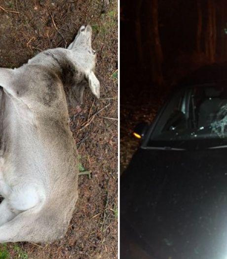 Opnieuw ging het mis op de N224 in Ede: twee dieren doodgereden