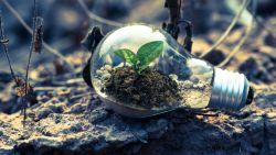 6 makkelijke tips om vandaag al ecologischer te gaan leven
