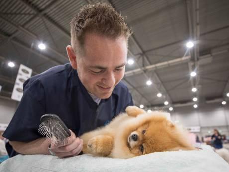 Hondenshow in de Zeelandhallen: op je paasbest voor de keuring