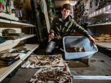 Muntenexpert over schatvondst van Quinten uit Deventer: 'Meer waarde in verhaal dan de muntjes'