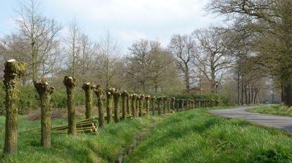 """Bonheiden krijgt hulp voor beheer van openbaar groen: """"Starten met bomenbeheerplan"""""""