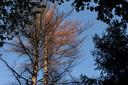 ,,Verbrande boomtoppen heb ik nog niet eerder gezien'', aldus boswachter Martijn Bergen.