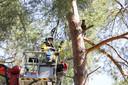 Terwijl de brandweer hem wil redden klimt Gino alleen maar hoger in de boom.