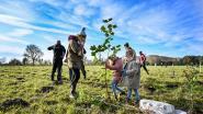 """Stad roept Groen-in-de-stad-fonds in het leven: """"Subsidies voor Lokeraars die hun buurt vergroenen"""""""
