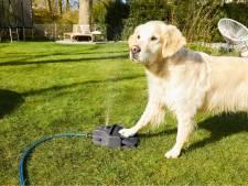 Let op je huisdieren met deze hitte, bijvoorbeeld met de 'hontein': een fontein voor je hond