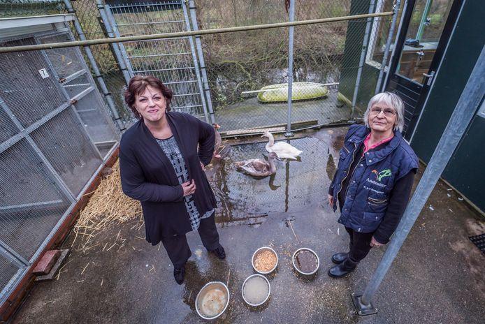 """Willeke van den Heuvel (links) met Winanda de la Rambelje, die voor haar veertig jaar buffelde voor de wildopvang. Van den Heuvel nam het stokje over. ,,Onze vrijwilligers werken van 8 uur 's morgens tot elf uur 's avonds."""""""