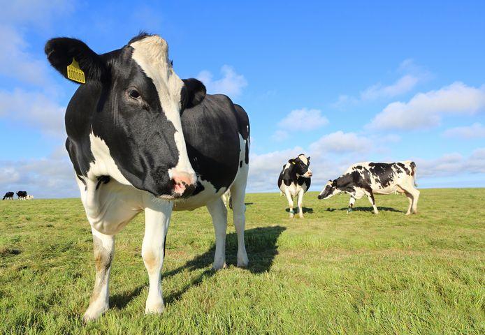 """""""Les dirigeants européens ignorent depuis trop longtemps l'impact de l'élevage sur le climat. La science est claire, les chiffres aussi: nous ne pourrons empêcher le pire du changement climatique si les politiques continuent à défendre la production industrielle de viande et de produits laitiers"""", estime Marco Contiero, directeur du pôle agriculture de Greenpeace."""