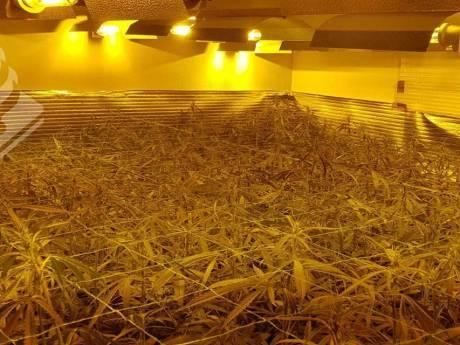 Hennepkwekerij van bijna 500 planten opgerold in Best
