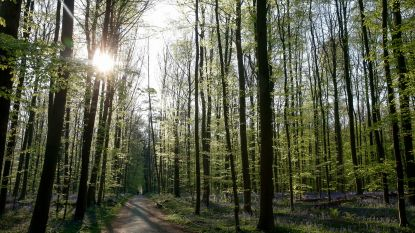 Kleine bosjes maken groot verschil