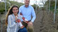 Meetjesland heeft zijn eigen wijn