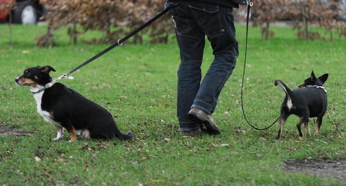Opbrengst van de hondenbelasting hoeft niet per se aan hondenzaken te worden uitgegeven. Maar de gemeente Vlissingen wees wel eerder uitlaatterreinen aan en verwierf een hondenpoepzuiger.