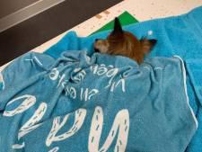 Verwaarloosd en doodziek hondje gered dankzij spoedrit naar dierenarts in Waalre