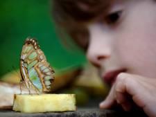 Rhenen en Lopik hebben meeste vlinders van de provincie